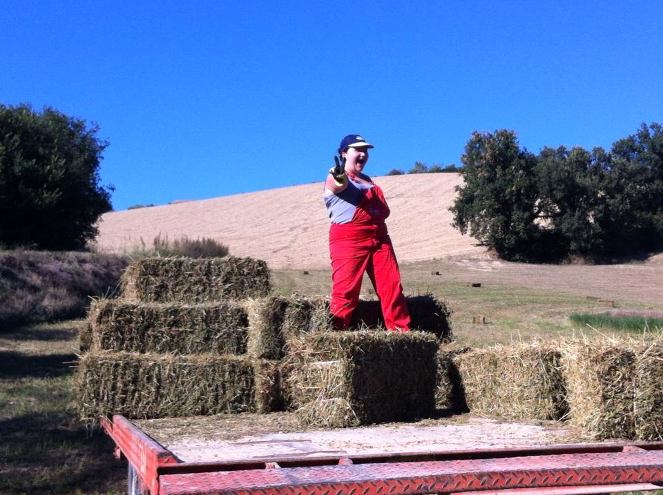 Roberta having fun on a hay bale