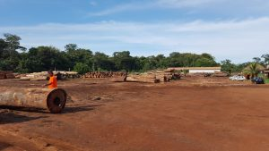 the results of selective logging