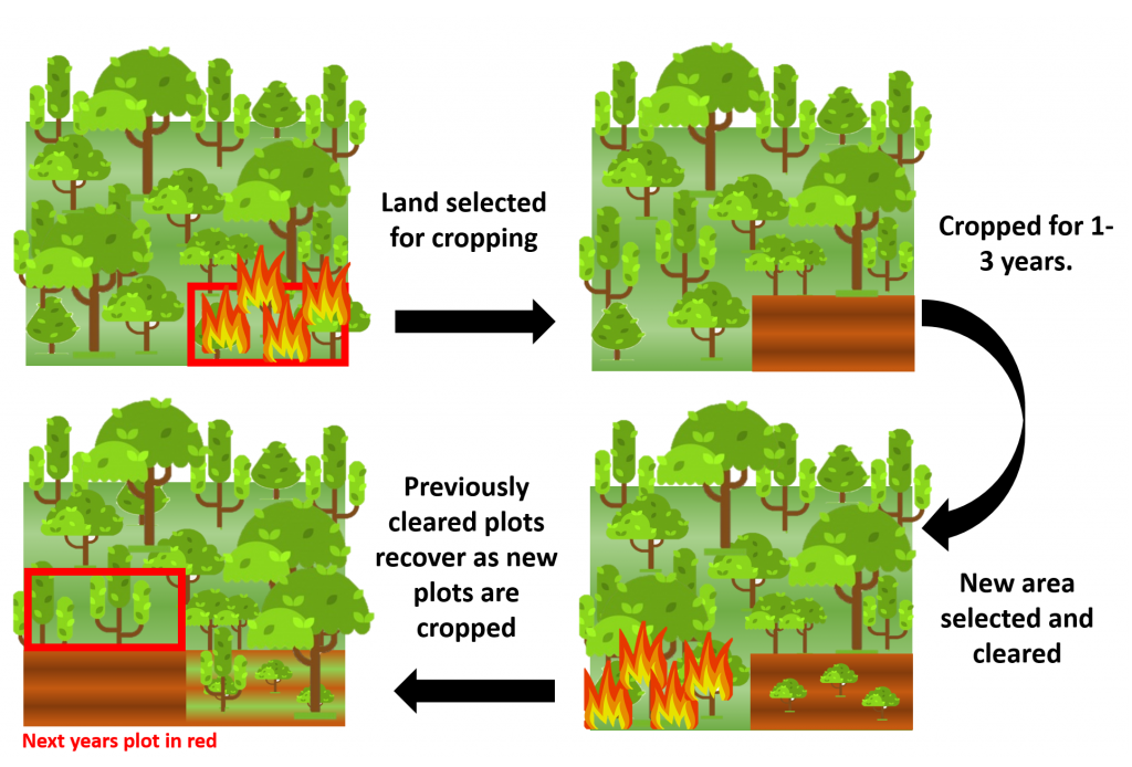 diagram of shifting cultivation practices