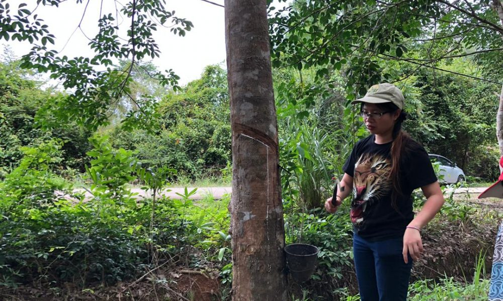 Reconciling rubber with biodiversity conservation in the field.