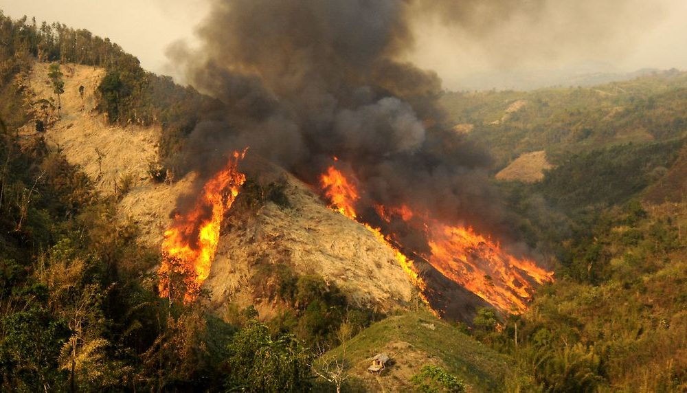 shifting cultivation - a forest on fire