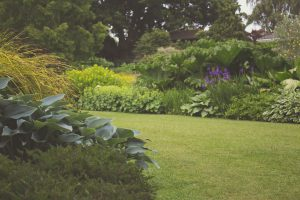 a picture of a garden with lots of plants - if you want your own green barrier to reduce air pollution just add plants