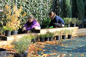 BREATHE in action - children planting the living barrier