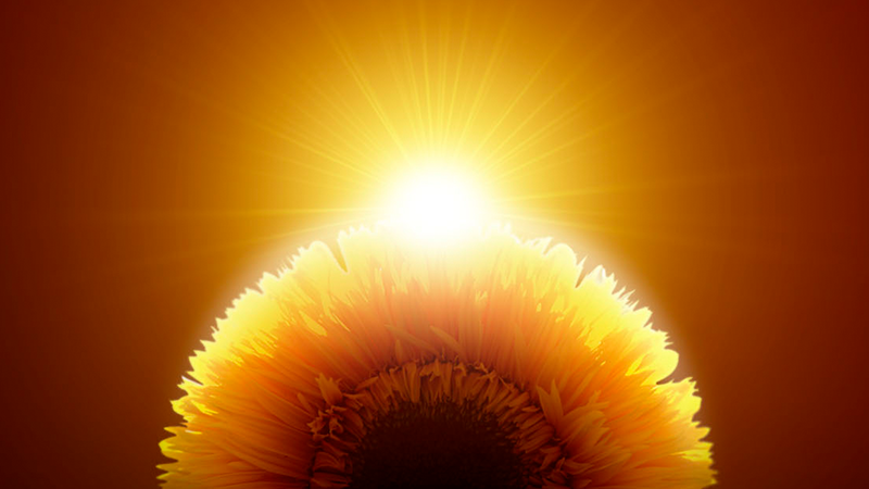 An abstract image of a sunflower in front of the sun