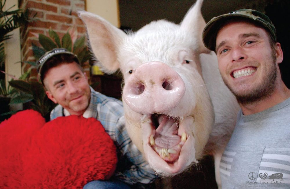2 men and a very big pig