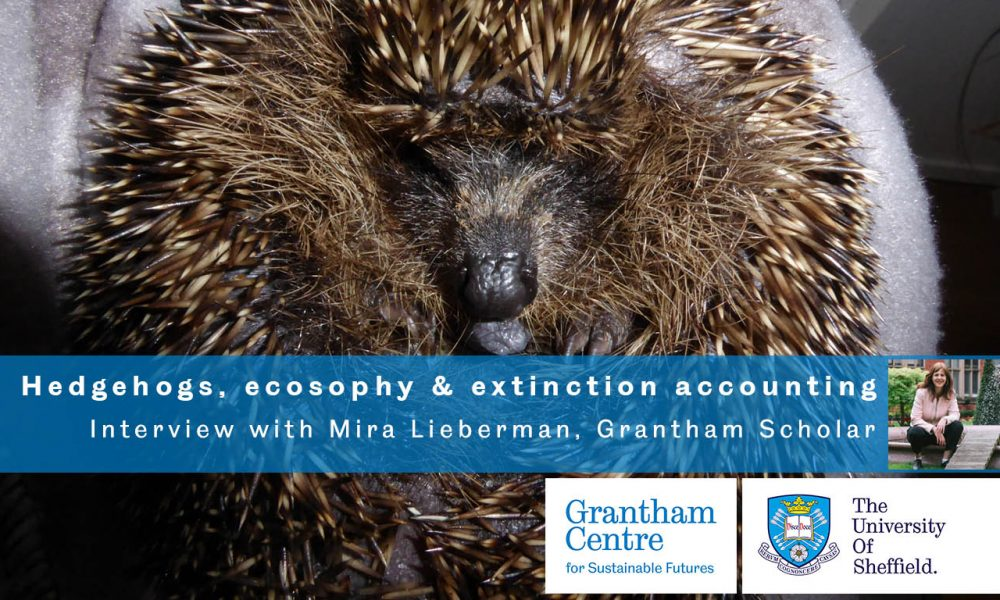A picture of a hedgehog ecosophy extinction accounting