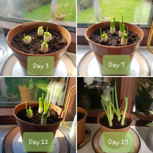 4 photos show seedlings in various stages of growth. Jana grew these as part of her Green Impact work